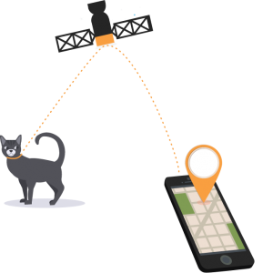 GPS-Illustration-Cat-Handy